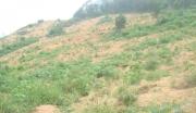 江西安福县80亩山地转让