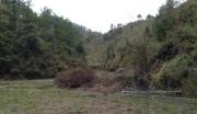 转让=梅州市2200亩大型林地/耕地