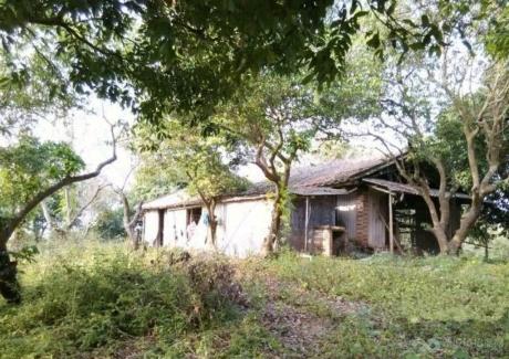 广东肇庆高要市白土镇35亩农用地转让 实景图