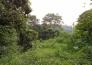 从化神棋公路旁23亩果园紧急转让实景图