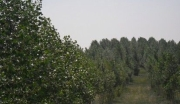 内蒙古兴安科尔沁右翼中旗农用地转让