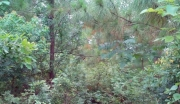 湖北宜昌当阳市500亩林地转让150万元