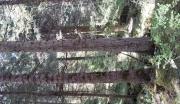 3200亩山林转让 1500000元