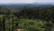 广东河源和平县长塘镇380亩林地转让