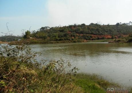 广东江门台山市三合镇40亩鱼塘转让 实景图