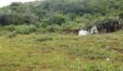 全国300亩林地转让84万元 有林权证