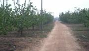 潍坊寿光78亩大樱桃园整体转让转让