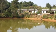 湖南长沙县高桥镇100亩 水田耕地水塘林地综合体 有房屋牛羊鸡舍