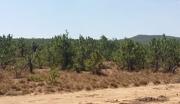 云南楚雄武定县高桥镇有17亩林地转让