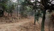 山林及资源低价转让