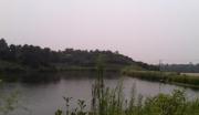 湖北宜昌当阳市60亩林地紧急转让