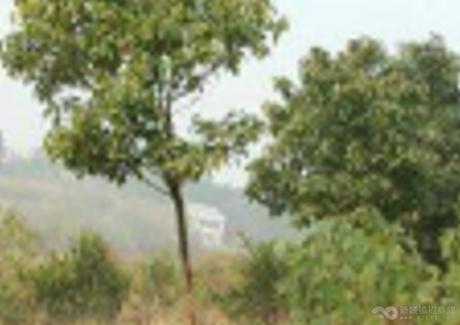 湖北荆州松滋市50亩农用地转让 实景图