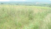江西吉安安福县70亩耕地转让