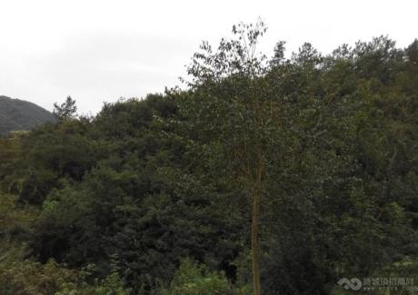 湖北宜昌当阳市65亩山地紧急转让实景图