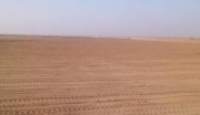 新疆阿克苏60000亩耕地转让