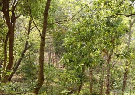 福建福州晋安区约百亩休闲农场转让500万元实景图