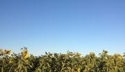 长春西土地,农场耕种,出租、转让、出售!
