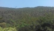 广东江门台山市水步镇千亩山林紧急转让