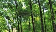 黑龙江伊春200亩林地转让300000元购地款十年五倍返还!