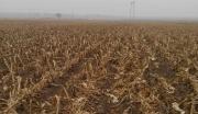 5000亩农用地转让