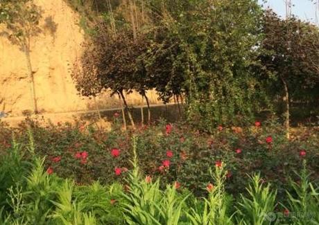 陕西渭南澄城县农场转让实景图