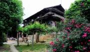 广西柳州三江侗族自治县林地紧急转让