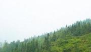 野山参等中药材林地