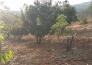 云南楚雄武定县插甸乡250亩林地转让实景图
