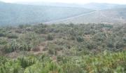 云南省320亩 荒山转让
