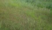 山东滨州沾化县6000亩适合农业开发未利用土地转让