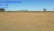 沈新路(102国道)法哈牛镇20亩土地转让