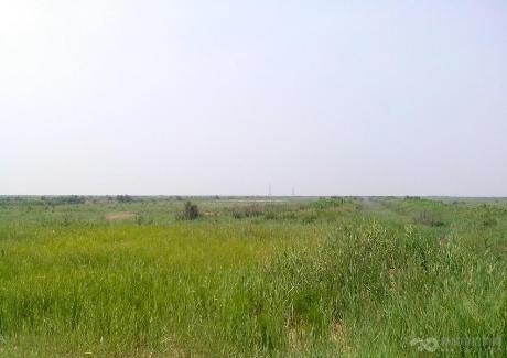 山東東營市河口區3700畝荒草地轉讓 實景圖