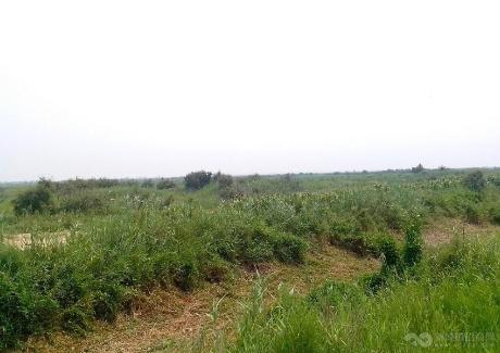 山东东营市河口区3700亩荒草地转让