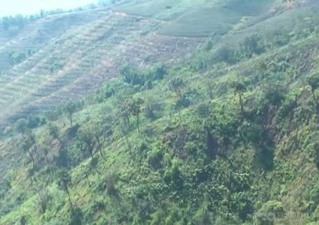 云南西双版纳傣族自治州景洪林地整体转让实景图