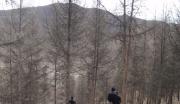 河北丰宁的山林整体转让
