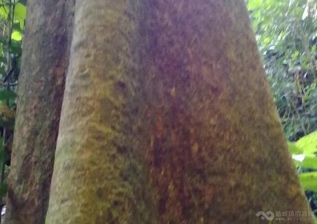 云南省西双版纳中缅边境缅甸南板县大量山林地出售