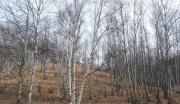 河北承德丰宁满族自治县山林转让,1610亩仅需150万