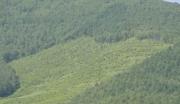 内蒙古赤峰129亩林地转让(可建旅游开发项目)