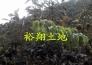 云浮市云城区100亩果园转让实景图