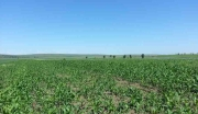 张家口尚义县800亩农耕水浇熟地出租7年承保权