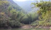 浙江杭州临安市337亩林地转让