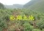 低价转让肇庆市封开县265亩花木山场实景图