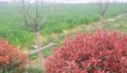 新区硕放36亩国有土地出售