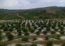 云南昆明石林彝族自治县综合用地整体转让实景图