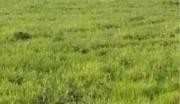 吉林省白城市镇赉县4.5万亩草原用地转让