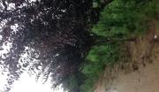 山东青岛黄岛区苗圃整体转让