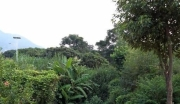 广东广州从化神棋公路边约23亩果园平地转让