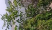 浙江临安青山湖11亩综合用地低价转让