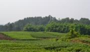 川内唯一具有定向挂牌国有建设用地指标的流转土地项目