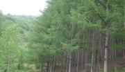 吉林市郊区土地林地500万出售